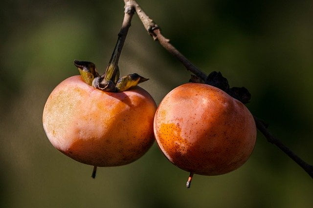 Beneficiile Persimmon (Persimmon) 1