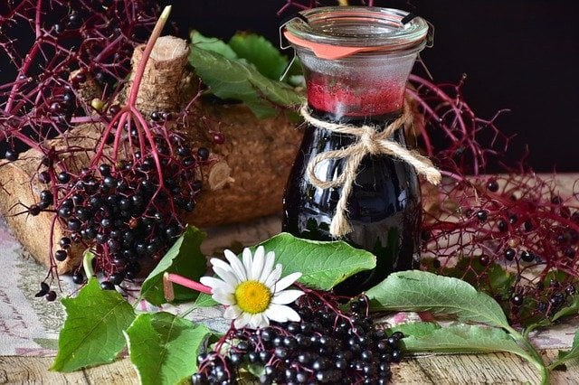 Elderberry Benefits 1